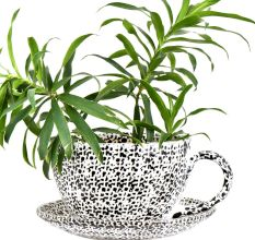 Ceramic Cup Saucer Planter Pot