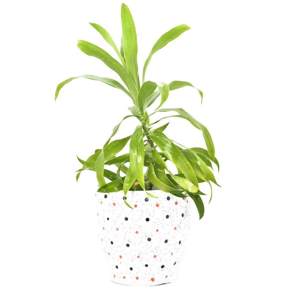 Ceramic Offwhite Polka Bucket Planter Pot