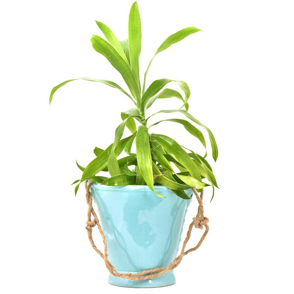 Blue Handcrafted Ceramic Planter