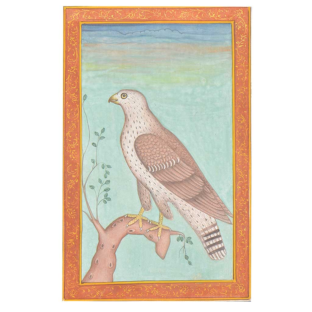 A Fine Anglo-Indian Hawk Print For Gifting